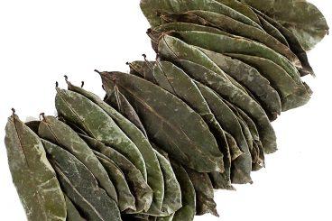Graviola Leaves(Air Dried)